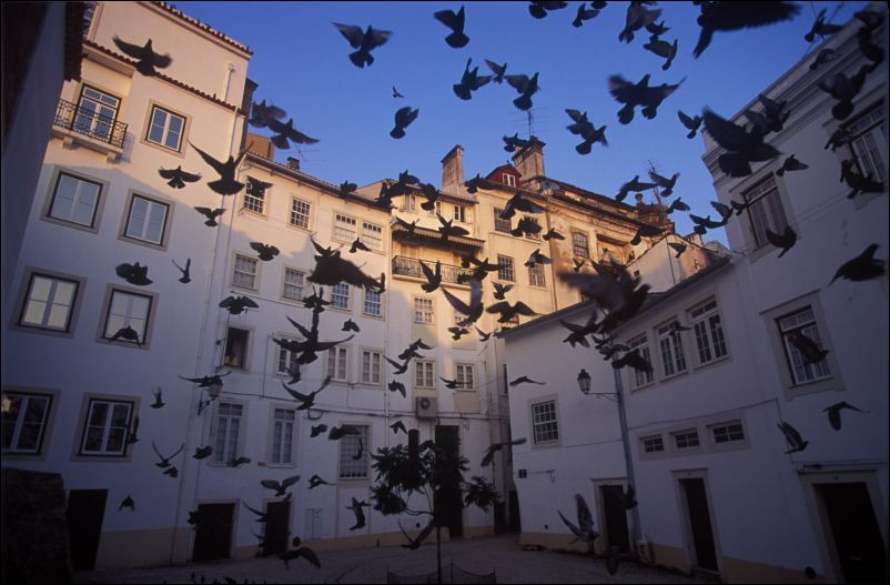 Coimbra Walking Tours