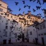 Plazas del centro, a pasos de su hotel en Coimbra